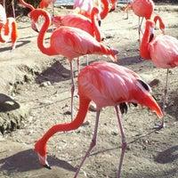 Photo taken at Sacramento Zoo by RJT on 1/12/2013