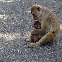 Photo taken at Khao Kheow Open Zoo by Yana L. on 5/22/2013