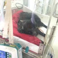 Photo taken at Thonglor Pet Hospital by Imcartoonnn T. on 8/27/2016