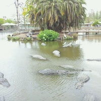 Photo taken at Gatorland by Stephen L. on 4/5/2013