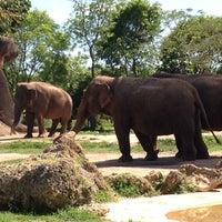 Photo taken at Zoo Miami by José O. on 5/5/2013