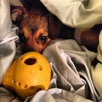 Photo taken at Perkiomen Animal Hospital by Dan H. on 12/8/2012