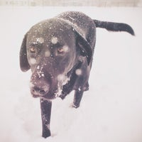 Photo taken at Normanskill Dog Park by Dylan B. on 2/7/2014