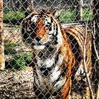 Photo taken at Exotic Feline Rescue Center by Jonalyn P. on 4/3/2012