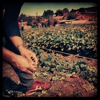 Photo taken at Tanaka Farms by iPacheco on 10/20/2013