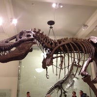 Photo taken at David H. Koch Dinosaur Wing by Larry on 11/27/2012