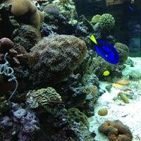 Photo taken at Aquarium City by chicanita on 1/27/2013