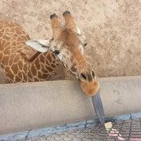 Photo taken at Abilene Zoo by Randal R. on 6/6/2013
