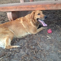 Photo taken at Westminster Dog Park by Sidney N. on 10/31/2013