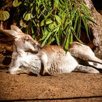 Photo taken at Perth Zoo by Nat W. on 7/14/2013