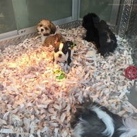 Photo taken at Citipups by Becky on 1/13/2017