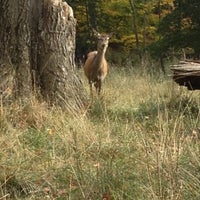 Photo taken at Dyrehaven by Laura C. on 10/18/2012