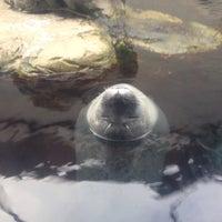 Photo taken at New England Aquarium by Saul on 8/21/2014