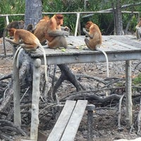 Photo taken at Labuk Bay Proboscis Monkey Sanctuary by  ᴊαnє  on 4/15/2016
