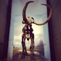 Photo taken at Milwaukee Public Museum, 3D Dome Theater & Planetarium by seaeun on 11/23/2012