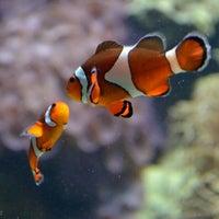 Photo taken at Vancouver Aquarium by Marcie C. on 9/9/2012