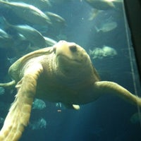 Photo taken at South Carolina Aquarium by Team🎈 A. on 3/29/2013