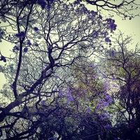 Photo taken at Parque México by Alejandra V. on 4/15/2013