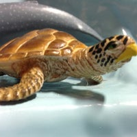 Photo taken at ECHO Lake Aquarium & Science Center by Tim C. on 7/14/2013