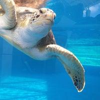 Photo taken at Texas State Aquarium by Pedro on 6/24/2013