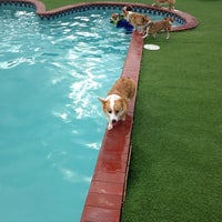 Photo taken at Happy Paws by Jamppa R. on 9/14/2013