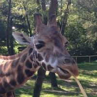 Photo taken at Zoo Schmiding by Milada J. on 8/8/2014