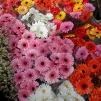 Photo taken at Columbia Road Flower Market by Jonathan C. on 9/30/2012