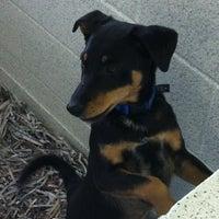 Photo taken at Atlanta Humane Society by Alex W. on 11/4/2012