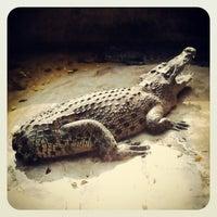Photo taken at The Million Years Stone Park & Pattaya Crocodile Farm by Vovan M. on 2/9/2013