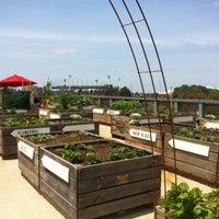 Little Veggie Patch Co Pop Up Garden Center