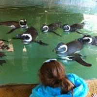 Photo taken at Gramado Zoo by Sandro S. on 7/26/2012