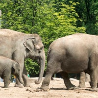 Photo taken at Zoo Berlin by Zoologischer Garten Berlin on 8/7/2014