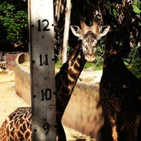 Photo taken at Los Angeles Zoo and Botanical Gardens by Cassidy U. on 6/19/2013