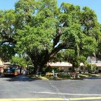 Photo taken at The Old Senator Tree by Teresa N. on 4/17/2016