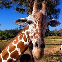 Photo taken at Busch Gardens Tampa by Mike M. on 11/26/2012