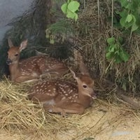 Photo taken at Zoo sauvage de Saint-Félicien by Simon R. on 6/26/2016