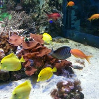 Photo taken at Sealife Centre by Nelson P. on 5/7/2013