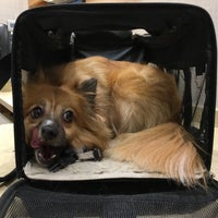Photo taken at Chelsea Animal Hospital by Chris M. on 7/8/2016