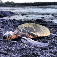 Photo taken at Punalu'u Black Sand Beach by Edward H. on 2/25/2013