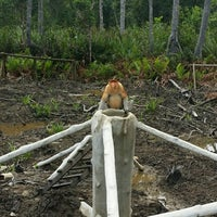 Photo taken at Labuk Bay Proboscis Monkey Sanctuary by Shahrul Izwani O. on 12/12/2014