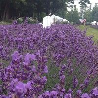 Photo taken at Lockwood Lavender Farm by Nikki P. on 7/13/2014
