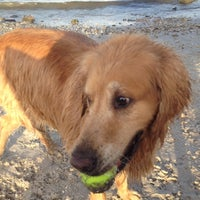Photo taken at Davis Island Dog Park by Gregory H. on 9/30/2012