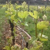 Photo taken at Vigneto Giardino by Lucia B. on 4/22/2012