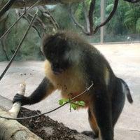 Photo taken at Monkey Exhibit by Tina P. on 1/11/2012