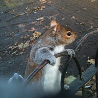 Photo taken at St James's Park by Alessandro C. on 12/11/2012