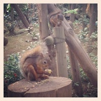 Photo taken at Inokashira Park Zoo by mmts g. on 10/13/2012