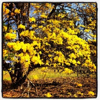 Photo taken at Harry P Leu Gardens by Joaquin V. on 4/5/2013