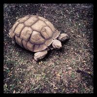 Photo taken at Maryland Zoo in Baltimore by Matthew K. on 9/9/2012