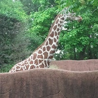 Photo taken at Saint Louis Zoo by Diane G. on 6/2/2013