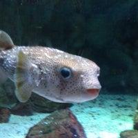 Photo taken at Sea Life Aquarium by Kim M. on 10/5/2012